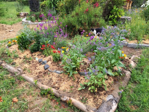 July 3...Hugelkulture bed is looking so much better since we weeded, planted, and mulched with compost and wood chips.