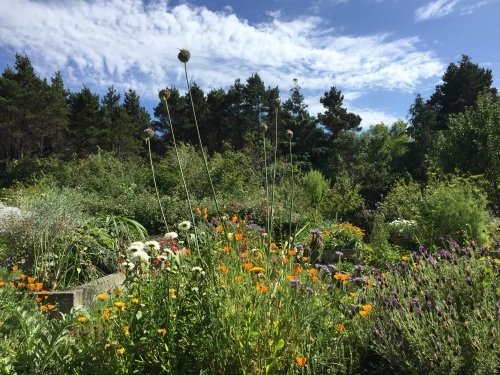A view from our garden bench in July reveals the garden in full glory.