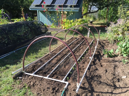 Planted 4 days after burying crab shell, hoops up, deer netting on, let's watch you grow. :)