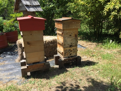 This hive (the one on the right) was real active back in June, and heavy with honey weight. What happened?