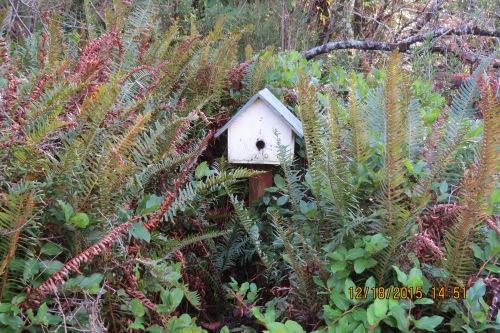10 Birdhouse bees, no bees, 12-18-15