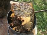 2436 Plenty of honey,2-20-16