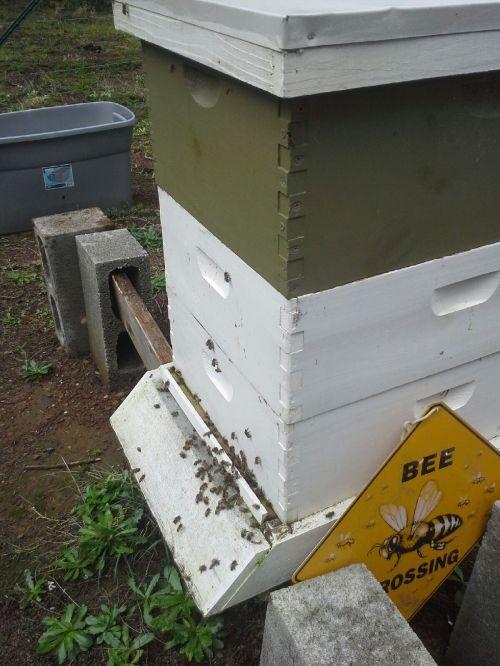 105751 Steve's hive, 2-17-16