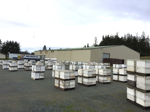 181 Several hundred hives, 3-24-15