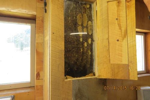 23 Hal's Observation hive, 7-14-15