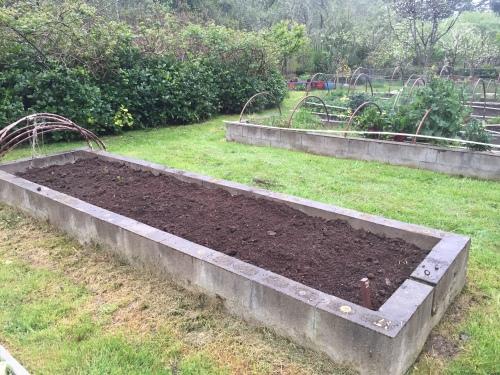 2610 Buckwheat planted today, 4-4-16