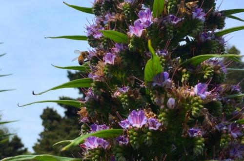 2804B Bee on Wild Prettii, 4-19-16 copy