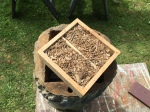 2811 Quilt box full of new sawdust,4-20-16
