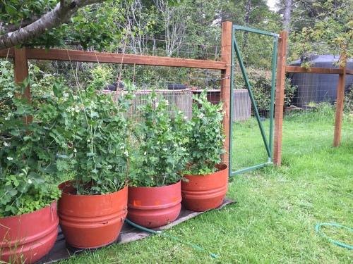 2892 Compost gate, 4-27-16
