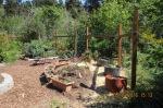 10 Sue's garden, (comparison)5-19-16