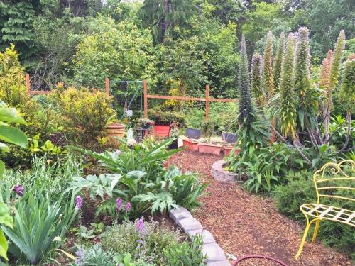 3146 Entrance into Sue's secret garden, 5-18-16