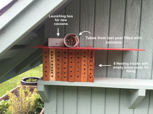 2503 Mason bees set up, 3-6-16, detailed