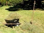 3556 Loading mulch in WB, 7-5-16copy