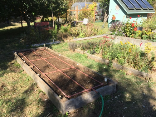 4116-planted-more-turnips-yesterday-10-8-16