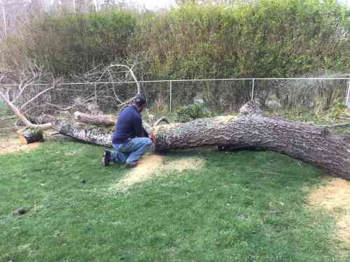 4564-mark-sawing-tree-2-13-17-copy